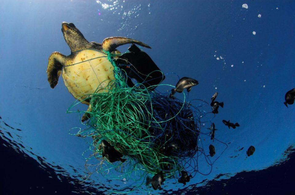 Estado de los océanos y como afecta al planeta