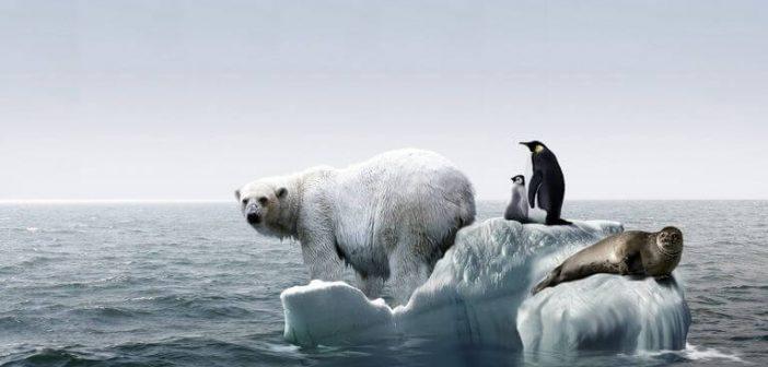 Efectos negativos del calentamiento global en animales