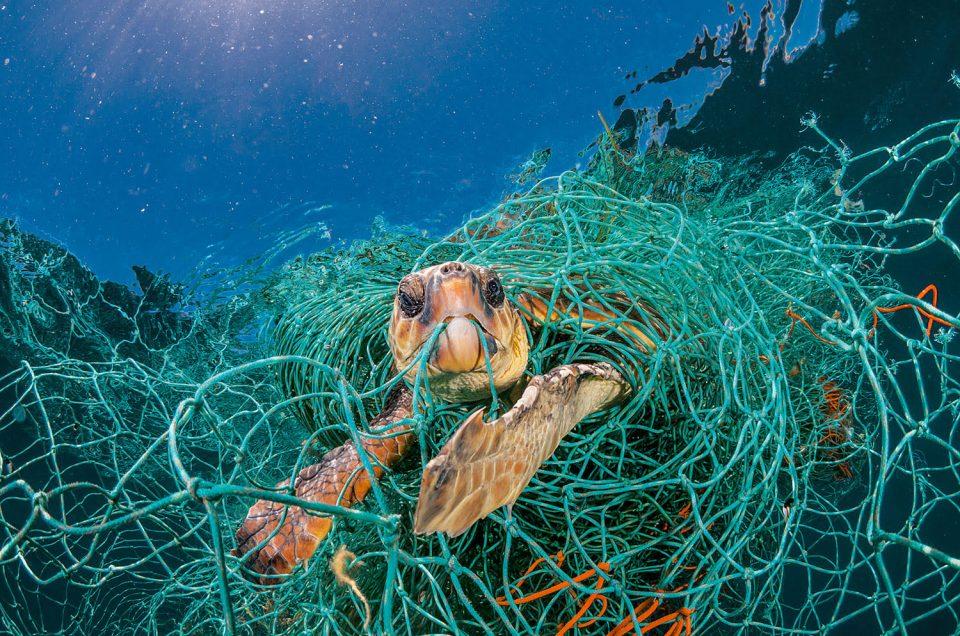 Un mar en peligro por causa de la indiferencia humana