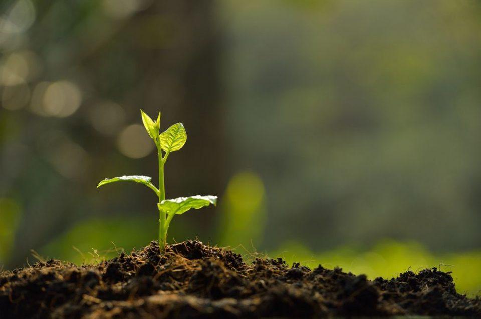 La importancia de la conservación del suelo