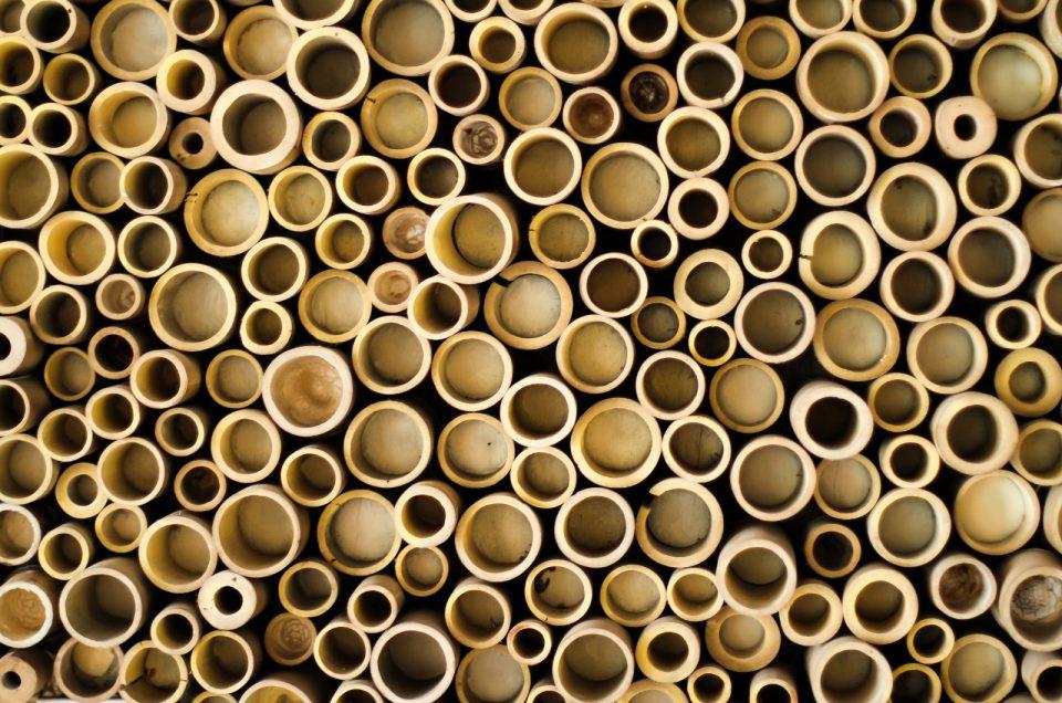 El Bambú, un recurso ecológico y sostenible